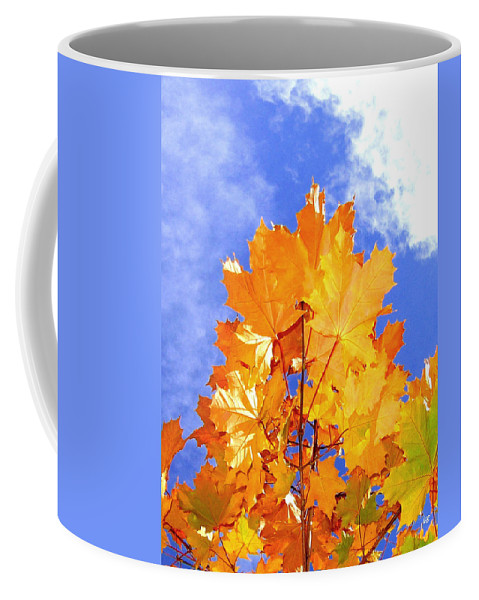 Maple Leaves Coffee Mug featuring the photograph Crown Of Gold by Will Borden
