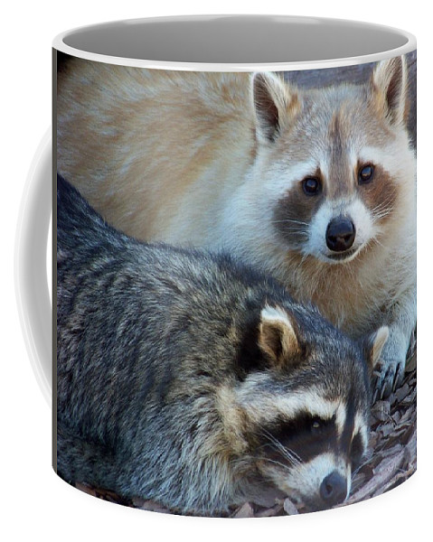 Racoon Coffee Mug featuring the photograph Cuddling by Karen Wiles