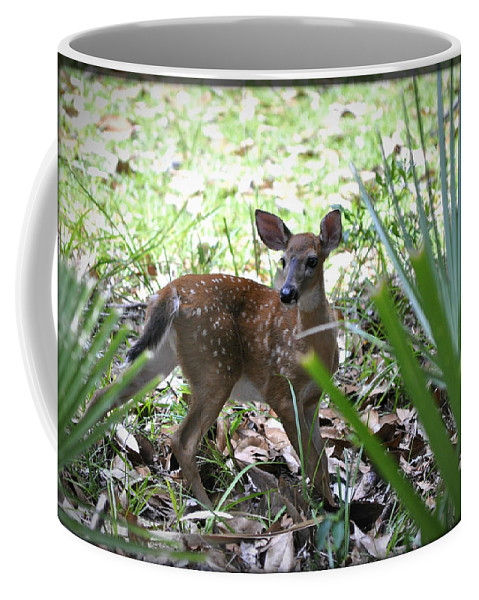 Animals Coffee Mug featuring the photograph Cumberland Island Deer by Debra White