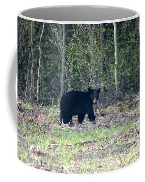 Black Bear Nature Wild Animal Trees Forest Rainbow Lodge Piprell Lake Saskatchewan Coffee Mug featuring the photograph Curious Black Bear by Andrea Lawrence