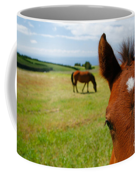 Farm Coffee Mug featuring the photograph Curious Colt by Gaspar Avila