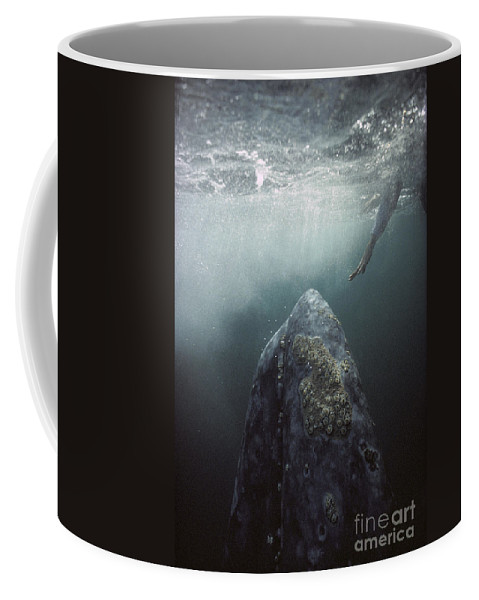 00143390 Coffee Mug featuring the photograph Curious Gray Whale and Tourist by Tui De Roy
