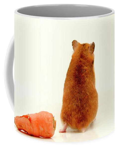 Hamster Coffee Mug featuring the photograph Curious Hamster 1 by Yedidya yos mizrachi