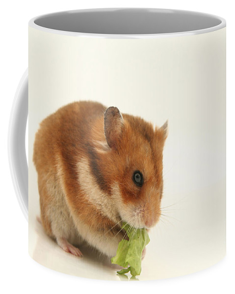 Hamster Coffee Mug featuring the photograph Curious Hamster by Yedidya yos mizrachi