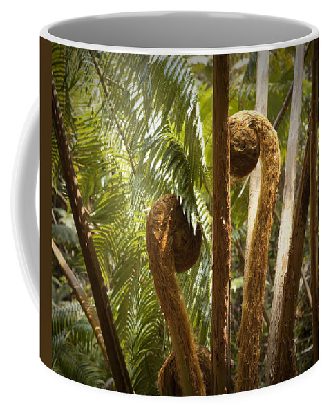Nature Coffee Mug featuring the photograph Curled And Delicate by Kelley King
