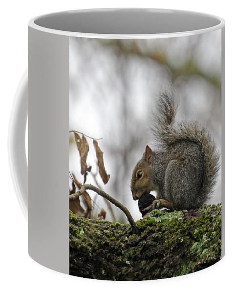 Curled Tail. Squirrel Coffee Mug featuring the photograph Curled Tail by Jennifer Robin