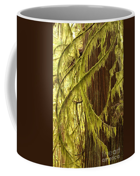 Natural Patterns Coffee Mug featuring the photograph Curves In The Rainforest by Carol Groenen