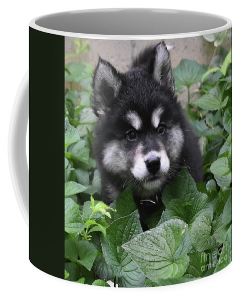 Alusky Coffee Mug featuring the photograph Cute Alusky Puppy In A Bunch Of Plant Foliage by DejaVu Designs