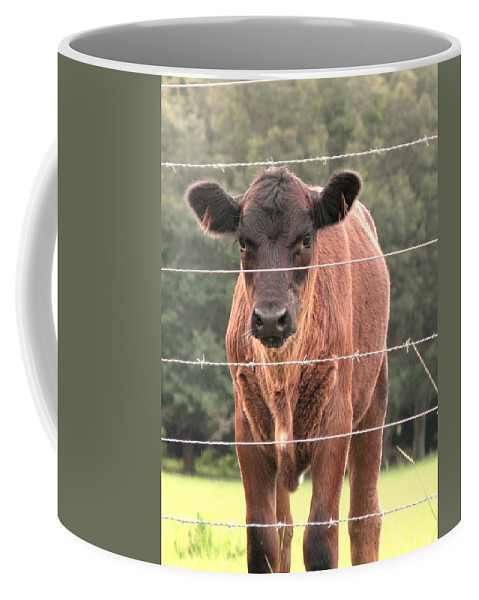 Nature Coffee Mug featuring the photograph Cute Calf by Peg Urban