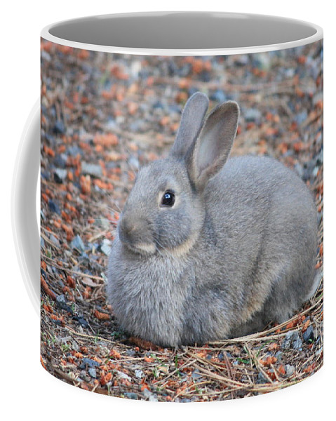 Rabbit Coffee Mug featuring the photograph Cute Campground Rabbit by Carol Groenen