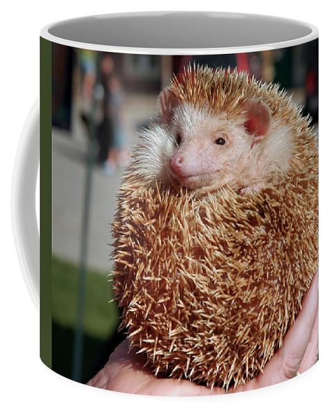 Usa Coffee Mug featuring the photograph Cute Little Hedge Ball by LeeAnn McLaneGoetz McLaneGoetzStudioLLCcom