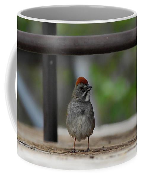 Bird Coffee Mug featuring the photograph Cute Redhead by Donna Blackhall