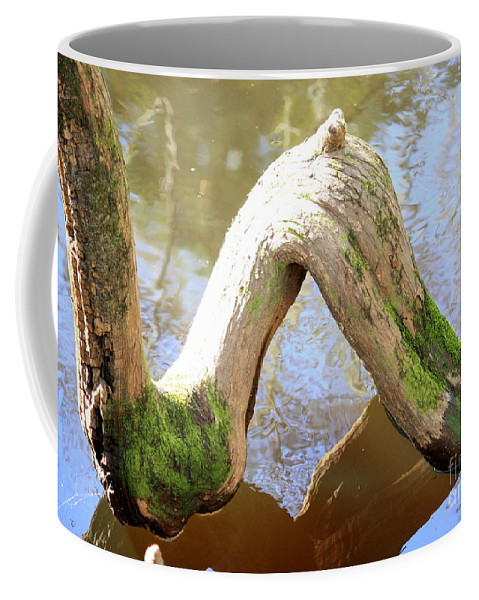 Cypress Knees Coffee Mug featuring the photograph Cypress Knees by Carol Groenen