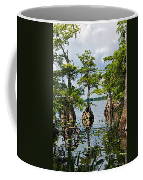 Trees Coffee Mug featuring the photograph Cypress Reflections by Christopher Holmes