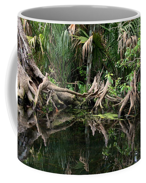 Cypress Tree Coffee Mug featuring the photograph Cypress Swamp by Barbara Bowen