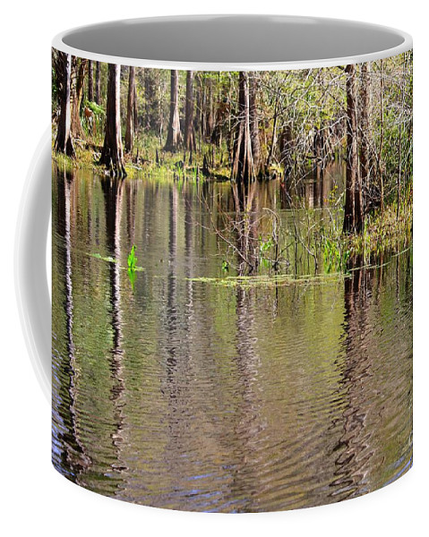 Cypress Trees Coffee Mug featuring the photograph Cypresses Reflection by Carol Groenen