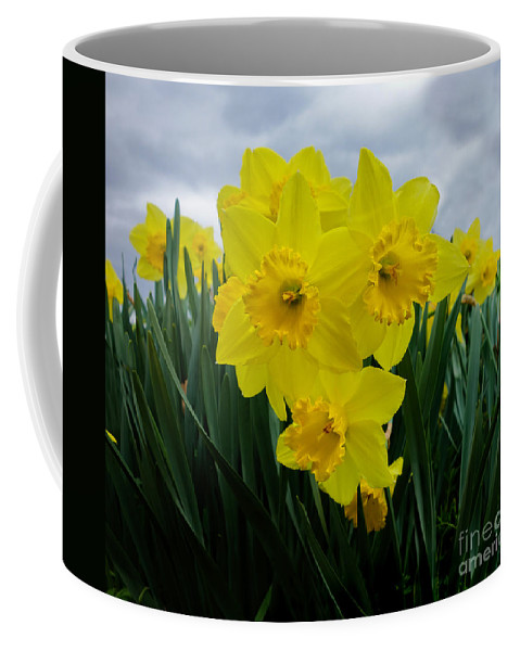 Daffodil Coffee Mug featuring the mixed media Daffodil Delight by Kim Henderson