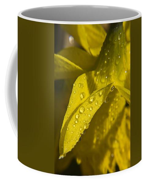Daffodil Coffee Mug featuring the photograph Daffodil Dew by Teresa Mucha