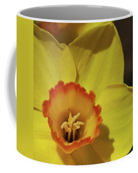 Daffodil Coffee Mug featuring the photograph Daffodil by Ernie Echols