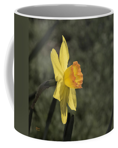 Amador County Coffee Mug featuring the photograph Daffodil by Jim Thompson