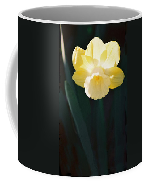 Daffodil Coffee Mug featuring the photograph Daffodil by Steve Karol