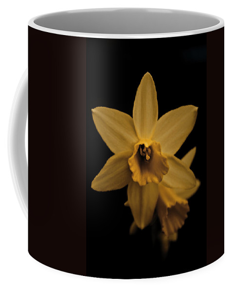 Flower Coffee Mug featuring the photograph Daffodils by Danielle Silveira