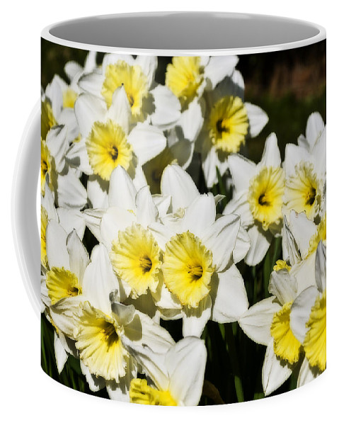 Flowers Coffee Mug featuring the photograph Daffodils by Svetlana Sewell