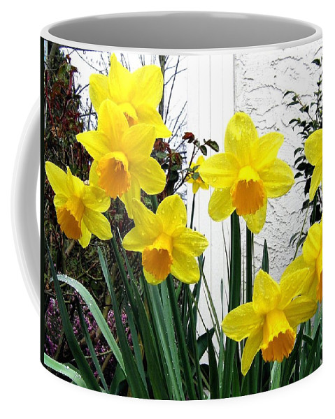 Daffodils Coffee Mug featuring the photograph Daffodils by Will Borden
