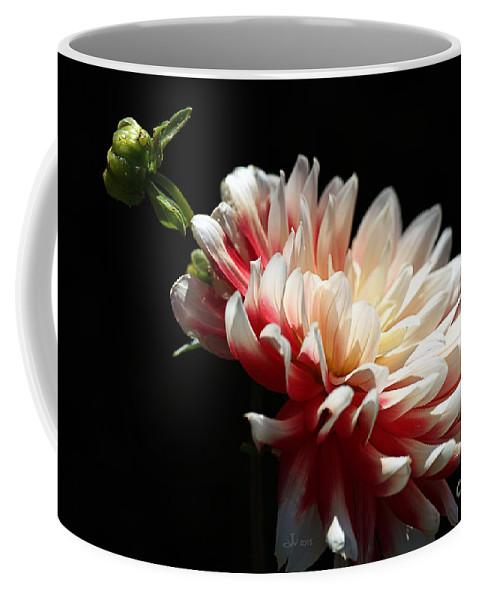 Joy Watson Coffee Mug featuring the photograph Dahlia Dreaming by Joy Watson