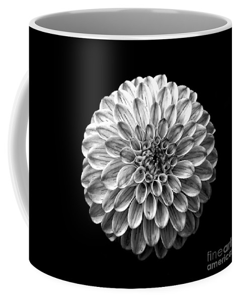 Square Coffee Mug featuring the photograph Dahlia Flower Black And White Square by Edward Fielding