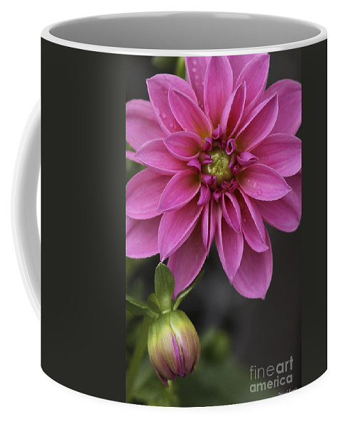 Flower Coffee Mug featuring the photograph Dahlia With Dew In Pink by Deborah Benoit
