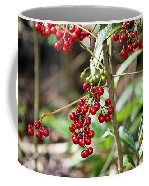 Holly Coffee Mug featuring the photograph Dahoon Holly by Kenneth Albin