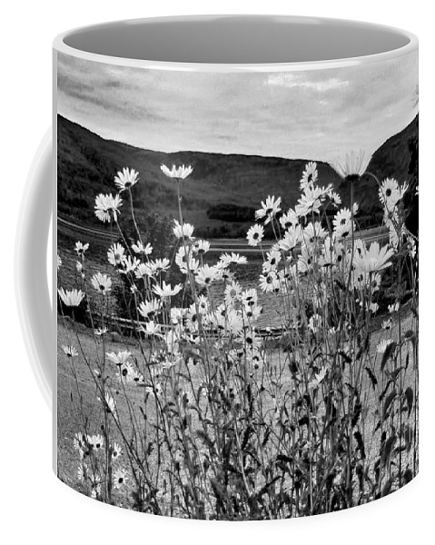 Daisies Coffee Mug featuring the photograph Daisies By The Roadside At Loch Linnhe B W by Joan-Violet Stretch