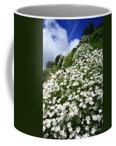 Countryside Coffee Mug featuring the photograph Daisies by Gaspar Avila