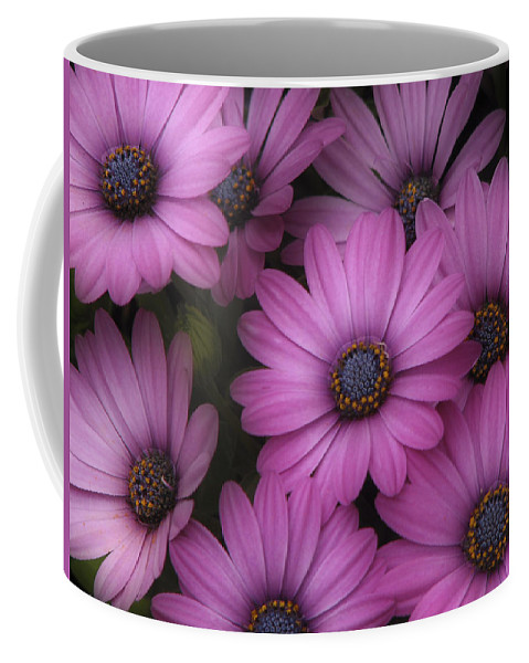 Nature Coffee Mug featuring the photograph Daisies In Dakota by Ches Black