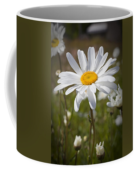 Daisy Coffee Mug featuring the photograph Daisy 1 by Kelley King