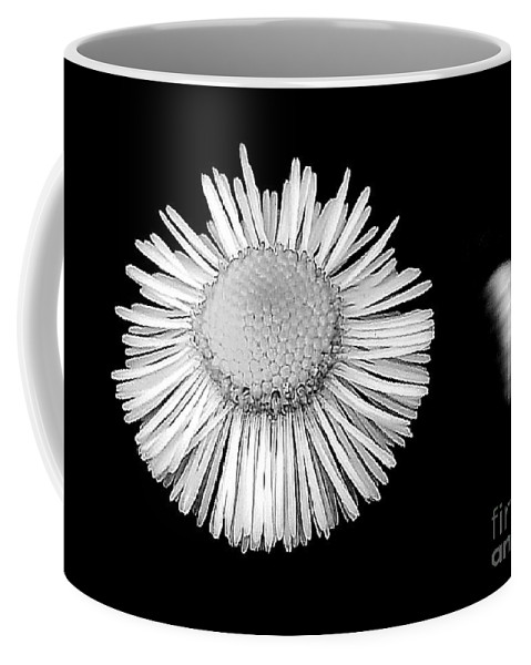 Daisy Coffee Mug featuring the photograph Daisy 4 by Lisa Renee Ludlum