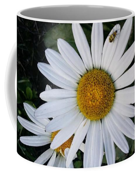 Daisy Coffee Mug featuring the photograph Daisy And Company by Tanya Anderson