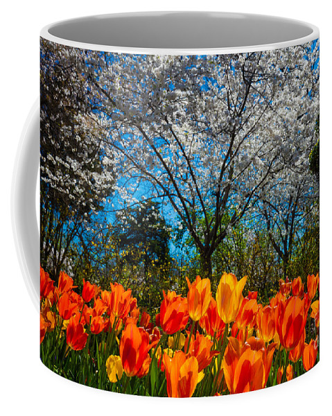 America Coffee Mug featuring the photograph Dallas Arboretum Tulips And Cherries by Inge Johnsson
