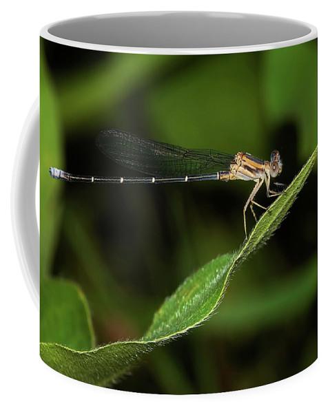 Damselfly Coffee Mug featuring the photograph Damselfly by Betty LaRue