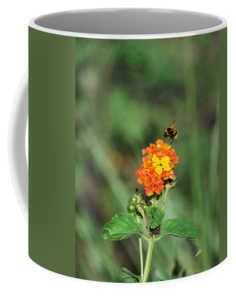 Bumble Bee Coffee Mug featuring the photograph Dance Of The Bumble Bee by Adele Moscaritolo