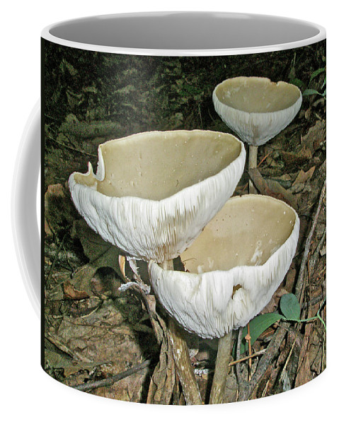 Mushroom Coffee Mug featuring the photograph Dance Of The Mushrooms by Mother Nature