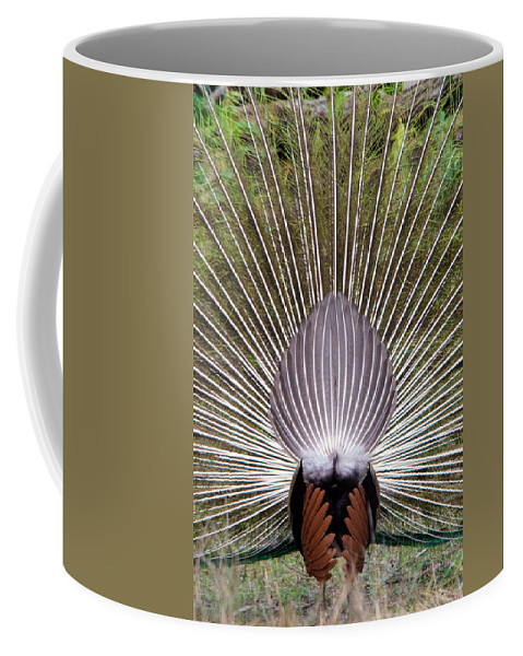 Photography Coffee Mug featuring the photograph Dancing Peacock, Kanha National Park by Panoramic Images