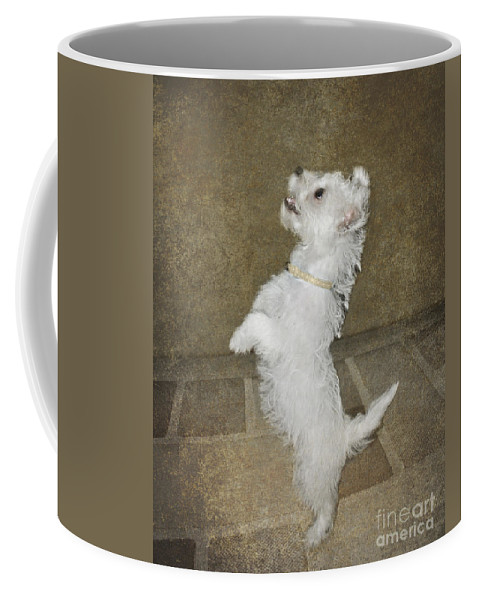 White Coffee Mug featuring the photograph Dancing Puppy by Terri Waters