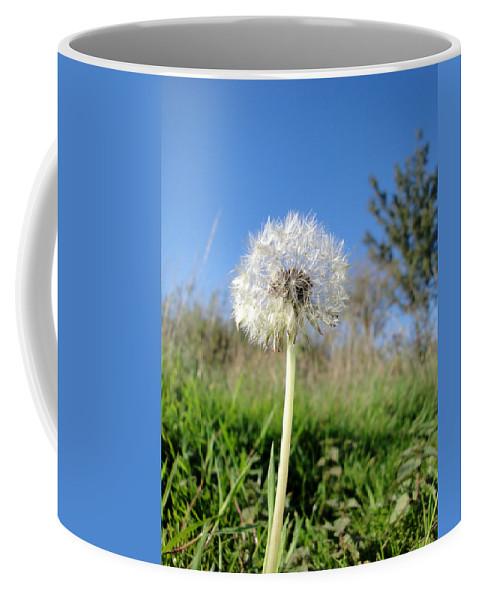 Dandelion Coffee Mug featuring the photograph Dandelion Clock by Susan Baker