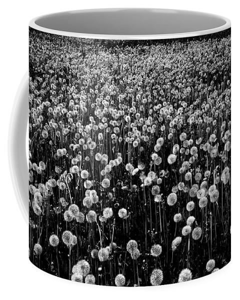 Dandelion Coffee Mug featuring the photograph Dandelion Field In Black And White by Olga Akulinina