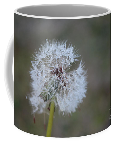 Dandelion Frost Coffee Mug featuring the photograph Dandelion Frost by Maria Urso