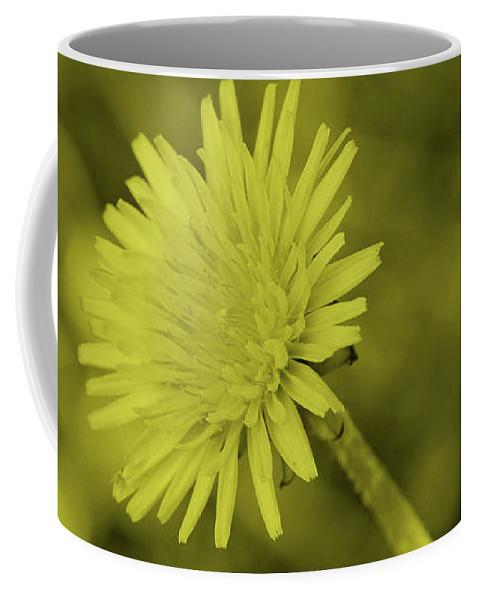 Tint Coffee Mug featuring the photograph Dandelion Tint by Eddie Barron
