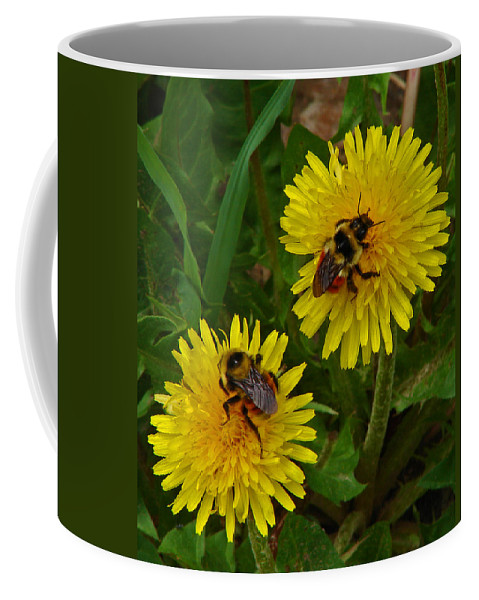 Dandelion Coffee Mug featuring the photograph Dandelions and Bees by Heather Coen
