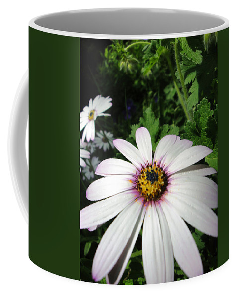 Flora Coffee Mug featuring the photograph Dandy Daisy by Susan Baker
